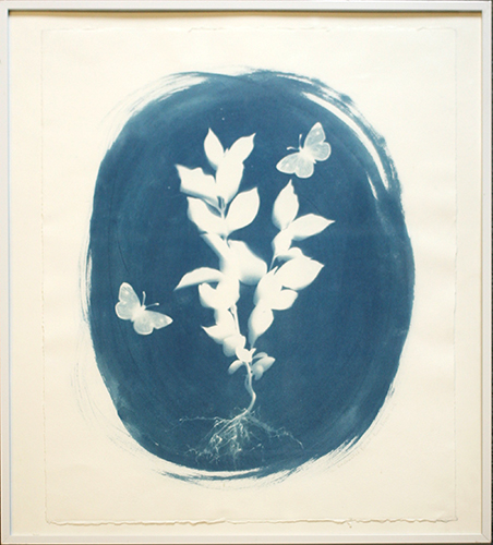 2508-Cyanotype-EnchantedForrest.jpg